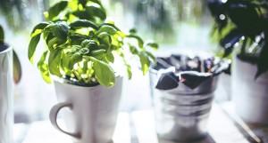 Plantas para tu propio huerto en casa