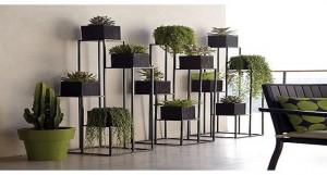 5 tipos de plantas para el interior de tu vivienda