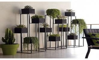5 tipos de plantas perfectas para el interior de tu vivienda