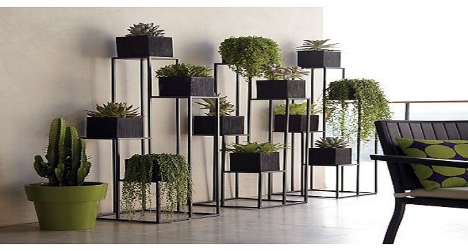5 tipos de plantas perfectas para el interior de tu - Plantas de interior tipos ...