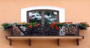 Plantas para el balcón