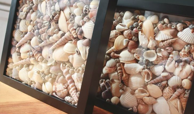 conchas como decoración de verano