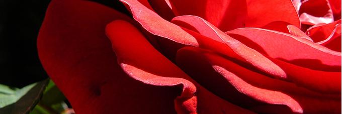 Decoración Romántica para San Valentín: flores