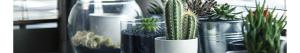 Tendencias en decoración 2017: plantas