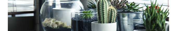Tendencias en decoración 2017: plantas