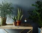 Las mejores plantas para casa; ¡dale un toque natural a tu hogar!
