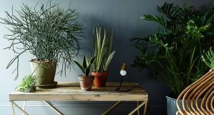 Plantas para hogar