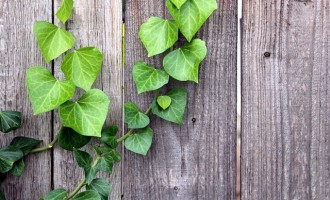 Motivos vegetales para decorar las estancias de tu vivienda