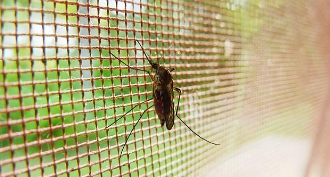 Repelentes caseros para acabar con los insectos en el verano