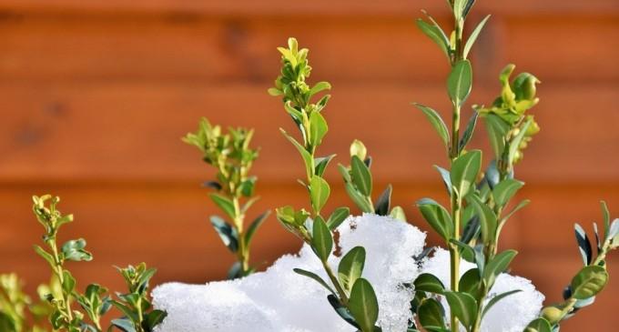Las mejores plantas de invierno para poner a punto tu jardín